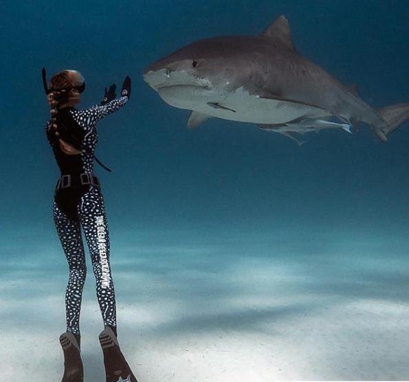 Why Shark Fin? | Shark Fin Properties